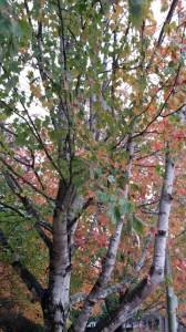 Fall_2015_1